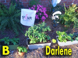 SusieQ FitLife Michelle Obama Garden Contest Entry by Darlene Meyers